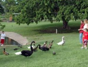 Anzac Park and Ululah Lagoon - Attractions